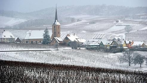 The snow is covering the vineyards, on November 29, 2010 in Heiligenstein, eastern France. Temperatures are set to plummet in France this week, as snow falls across much of the country. The thermometer is forecast to fall as low as -11°C in the east and -8°C in Paris. AFP PHOTO / PATRICK HERTZOG