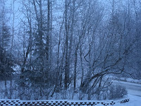 Hoarfrost in Snow Fog - MM Rydesky