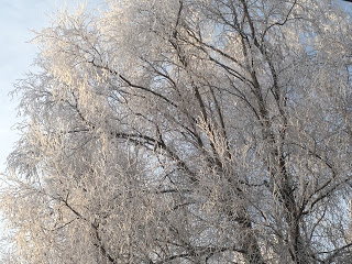 Hoarfrost in Sun - MM Rydesky