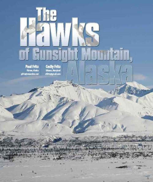 the-best-alaskan-hawkwatch-article