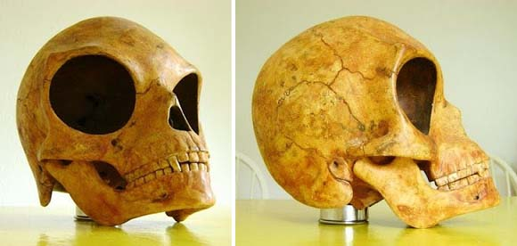 The Sealand Skull – Remains of an extraterrestrial being?  Craneo-Sealand