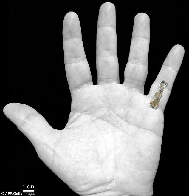 The 1.85 million year old bone was found in Tanzania's Olduvai Gorge