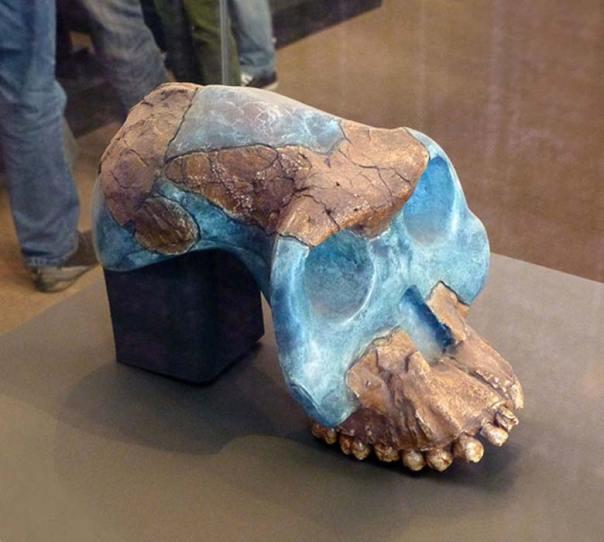 Cráneo reconstruido de un Australopithecus garhi, una de las especies que utilizaba herramientas de piedra de tecnología olduvayense. (Ji-Elle/CC BY SA 3.0)