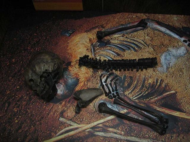Huesos de Windeby I temporalmente expuestos en el Archäologisches Landesmuseum de Schleswig. (CC BY-SA 3.0)