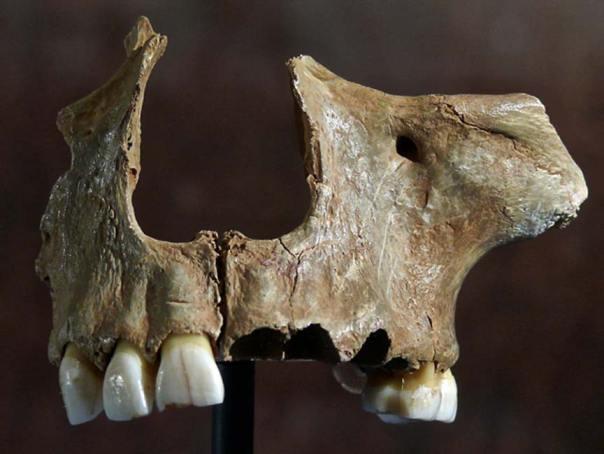 Fragmento de cráneo hallado en la Cueva de Gough (Public Domain)