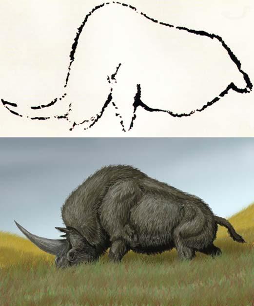 In alto: arte rupestre di Rouffignac, in Francia, pensata per rappresentare l'Elasmotherium estinto.  In basso: Elasmotherium sibiricum.