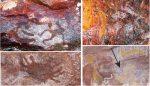 Comment faire : Une étude révèle un lien rare entre l'art rupestre autochtone et la sorcellerie et la magie
