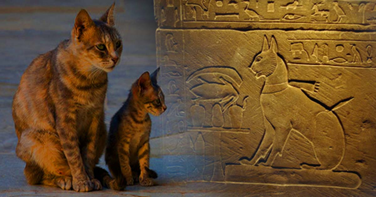 Image result for historical cats