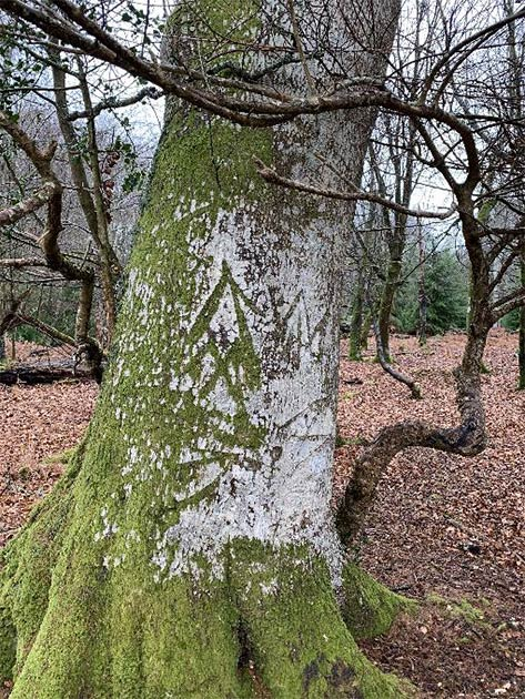 Marque du roi sur l'un des arbres de New Forest, Hampshire, Angleterre.  (Parc national New Forest)