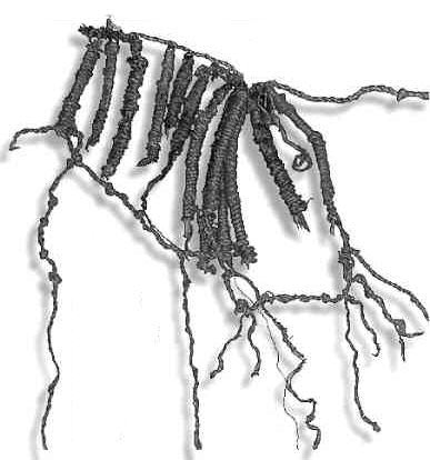 The quipu found in Caral