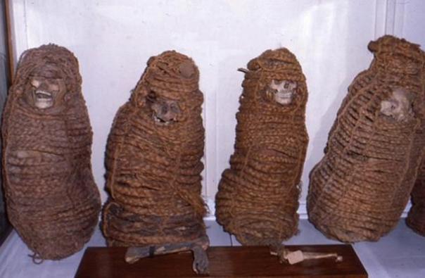 momias Asket se prepararon tratándolas con humo y luego envolviéndolos y colocándolos en cestas.