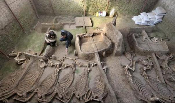 Fosa se encontró la semana pasada que contiene 13 esqueletos completos de caballos.