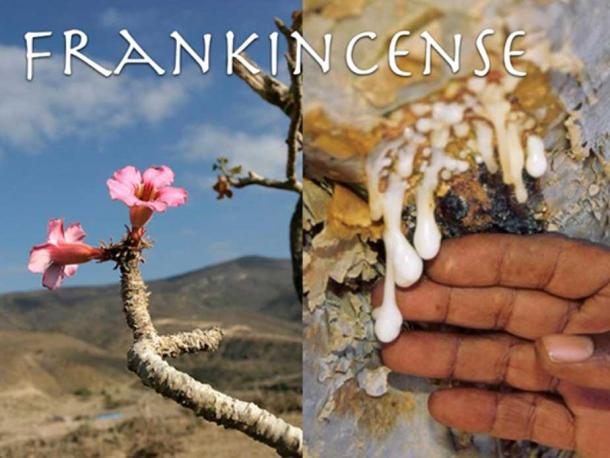Frankincense. (Author provided)