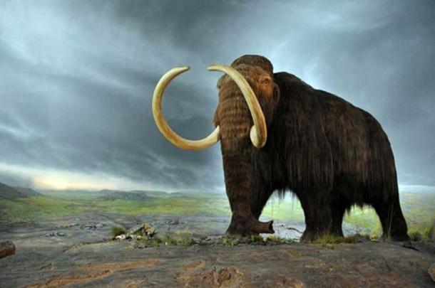 Esposizione di mammiferi nel Royal BC Museum di Victoria (Canada). (CC BY SA 2.0)