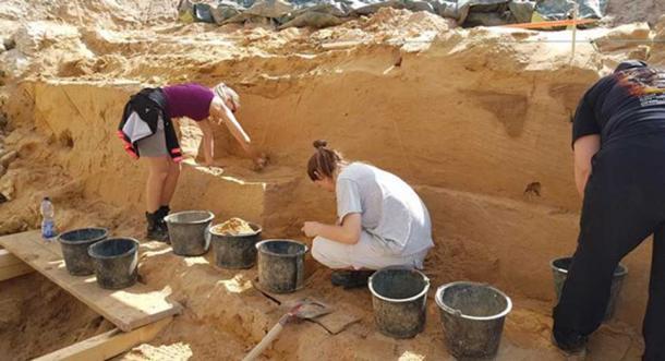 I denti fossilizzati sono stati trovati in uno strato di sedimenti accanto a una specie estinta di cavallo. Il Museo di Storia Naturale di Mainz