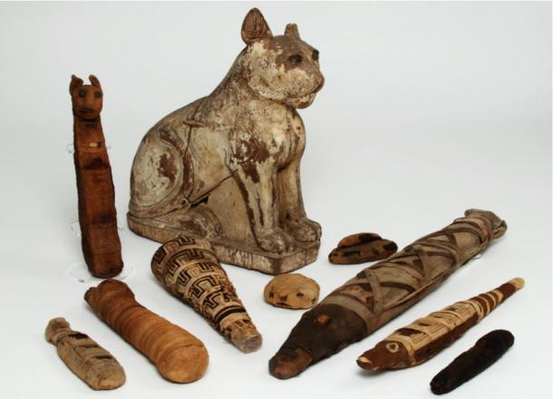Various animal mummies from ancient Egypt.