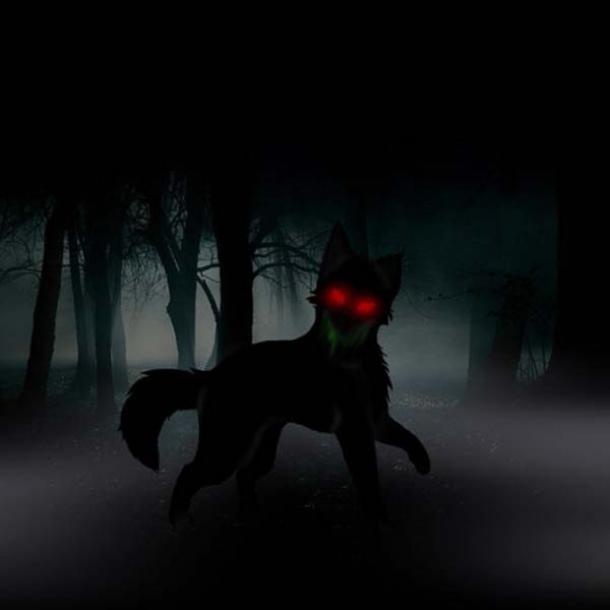 Un cane nero nel bosco.
