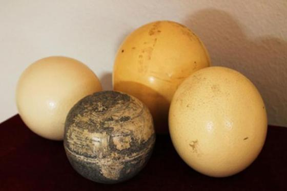 The early sixteenth-century engraved ostrich egg globe among other ostrich eggs. Photo: Washington Map Society.
