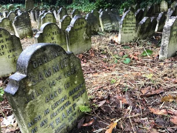Pierres tombales à l'un des cimetières pour animaux de compagnie.  (E. Tourigny / Antiquité)