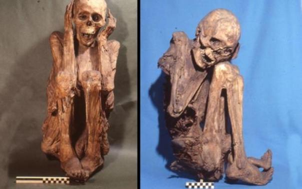 Una colección de momias conservadas natural procedentes de la antigua sede de Cusco, Perú.