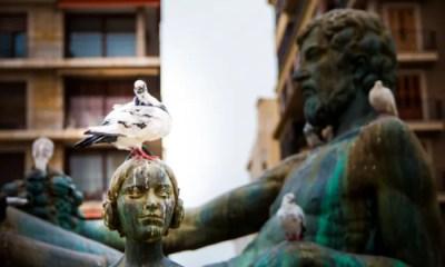 Meaning of Birds poop in Vedic Astrology