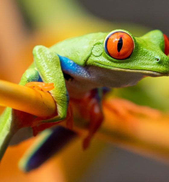 Meaning of Seeing a Frog in Dream