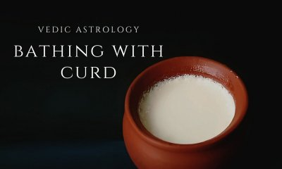 bathing with curd