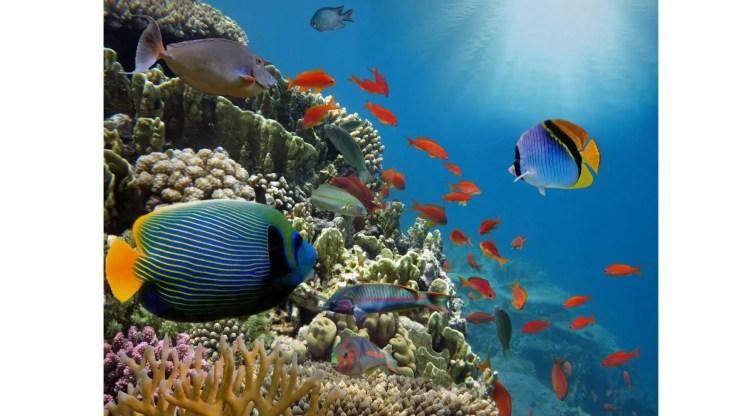 Vastu Tips for Wealth Aquariums