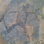 One of the petroglyphs photographed on Pine Trees beach. ( Avi Salvio )