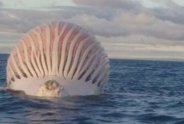 This bizarre ocean blob has been identified. (Photo: Mark Watkins/Facebook)