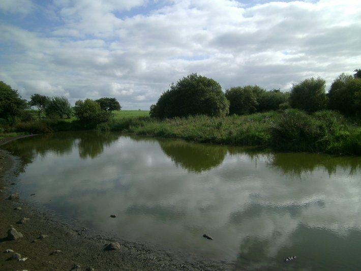 Visit Ireland and ancient Lough Lugh at Uisneach