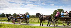 Jaunting Cars Killarney County Kerry