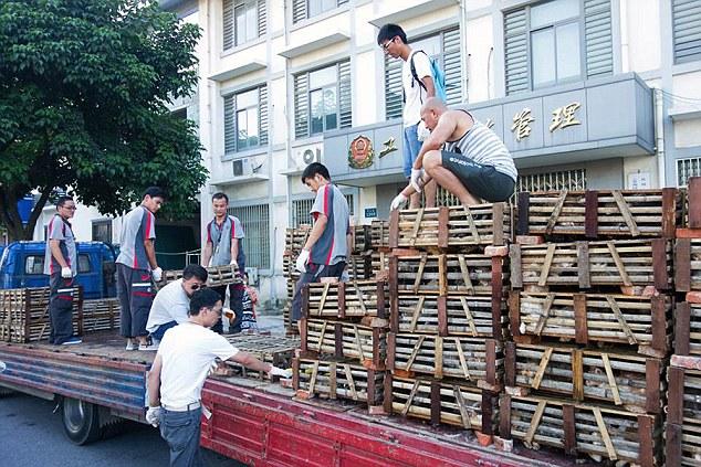 O caminhão apreendido continha 50 caixas pequenas, com estimados 20 gatos apertados dentro de cada uma. Foto: Daily Mail