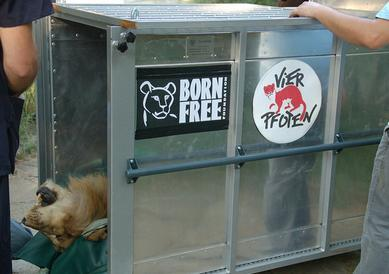 Foto: Born Free Foundation