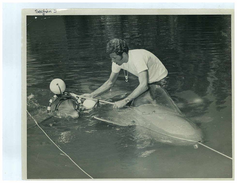 Ric O'Barry com Kathy. Foto: The Dolphin Project