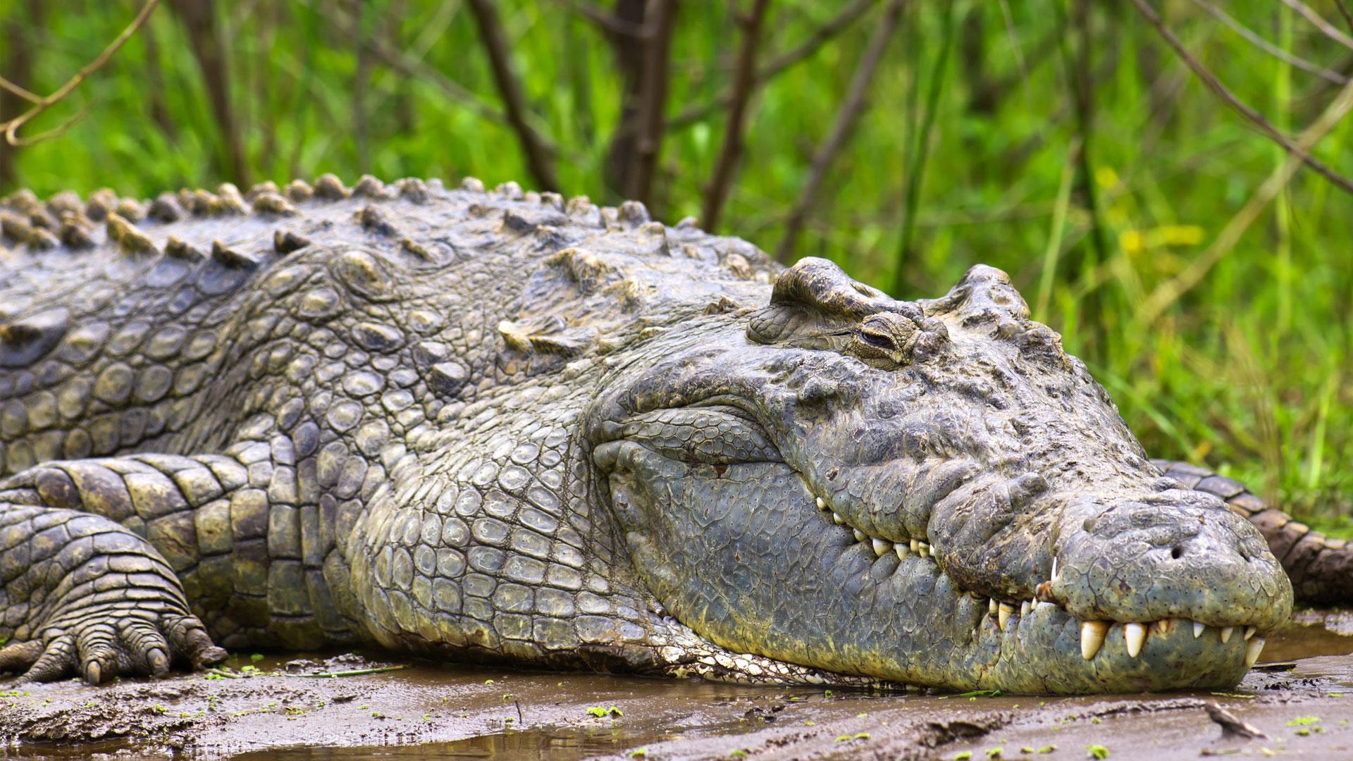 Murchison Falls National Park | Uganda | andBeyond