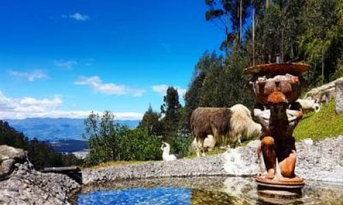 little lake on the garden of Rumi Loma with nice alpacas haciendas