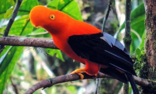bird finca banos photography tour Ecuador & Galapagos