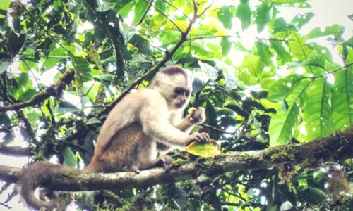 monkey finca banos photography tour Ecuador & Galapagos
