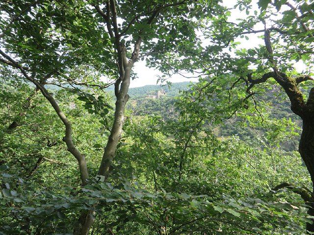 Hier steht ein Bild mit dem Foto: Beim Aufstieg auf der AhrSteig-Etappe 5 schimmert Burg Are durch das Grün der Bäume (Foto: Hans-Joachim Schneider)
