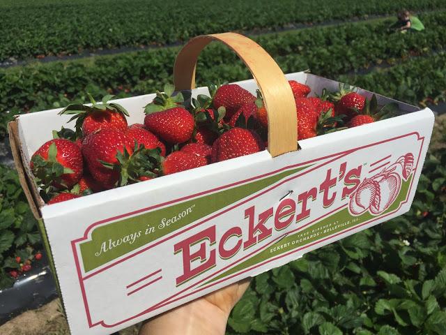 Strawberry Festival at Eckert's
