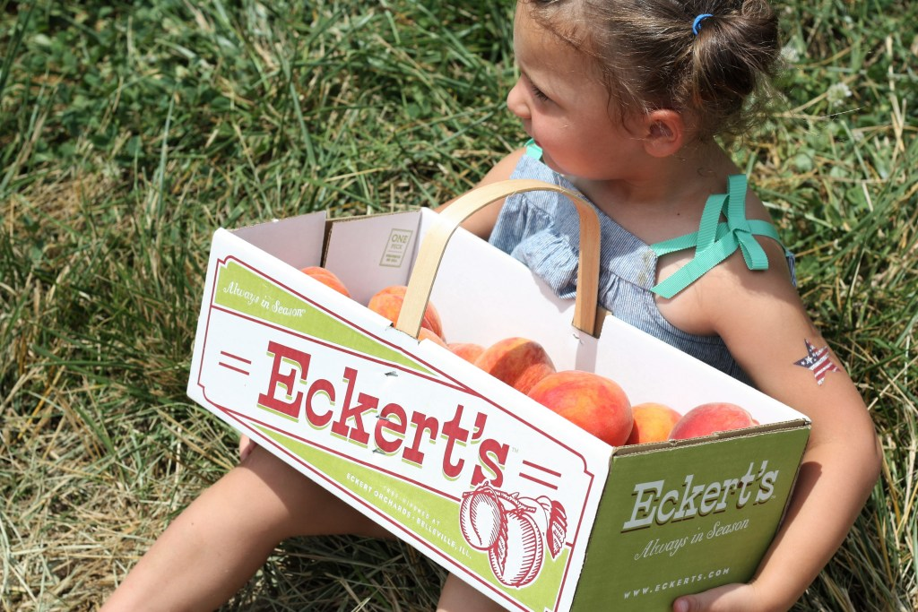 Peach Picking Fun at Eckert's