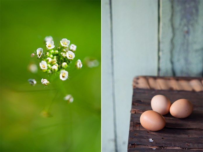 flower-and-eggs