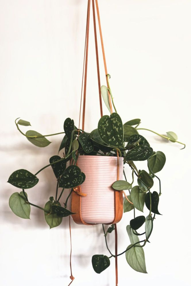 House Plant Trends