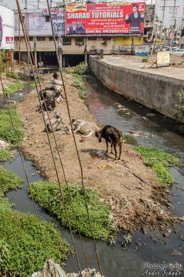 wpid242-Indien-008.jpg