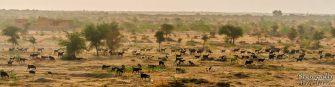 wpid326-Indien-050.jpg