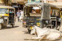 wpid334-Indien-054.jpg