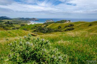 wpid1395-Neuseeland-044.jpg
