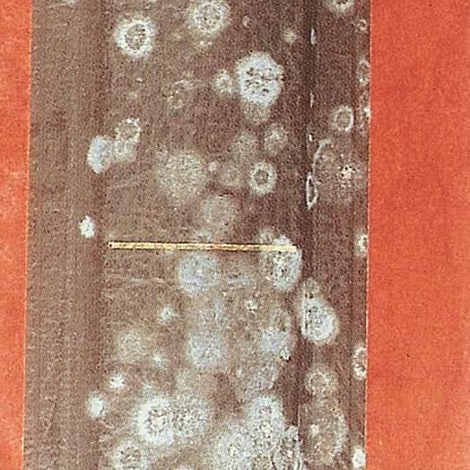 Colonies de moisissures entre le stade végétatif et le stade reproductif