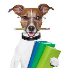 Übungstag Tierkommunikation in 83527 Haag